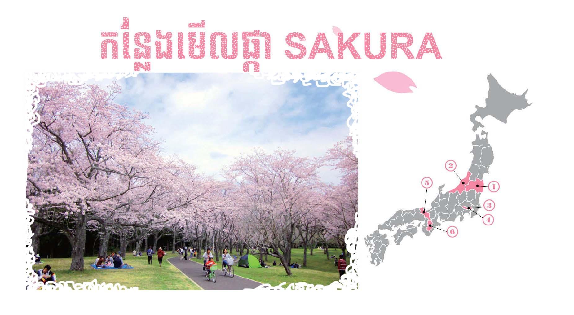 កន្លែងមើលផ្កា SAKURA 【Special2】